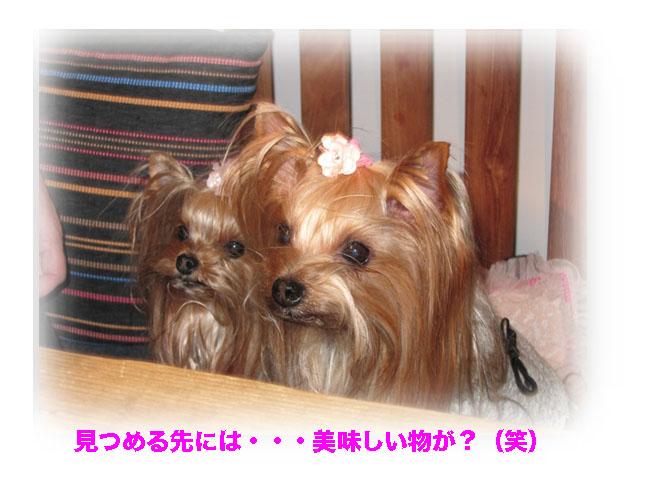 IMG_3235.jpg