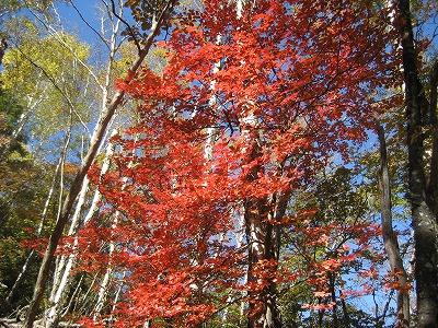 大笹あたりの紅葉