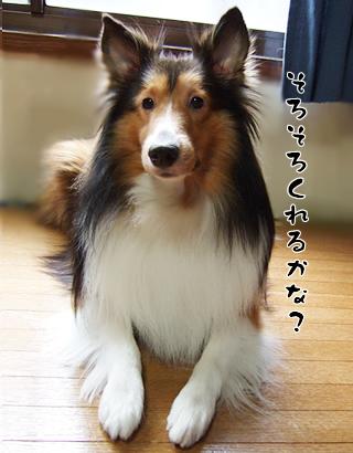 ご褒美待ち(^-^;