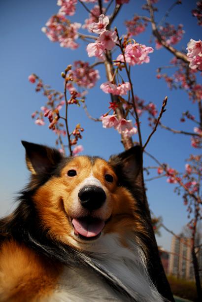 桜とフラッシュ♪