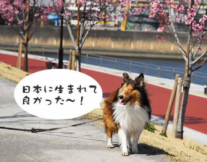 日本に生まれて良かった~!