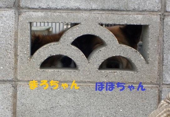 330310.jpg