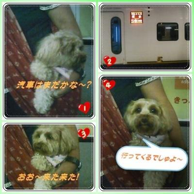 cats10_convert_20091005110238.jpg
