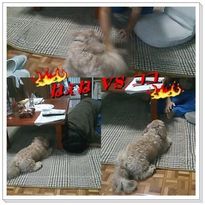 cats_convert_20091026130534.jpg