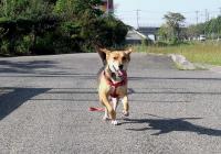 散歩20090924-1