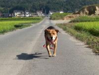散歩20090924-5