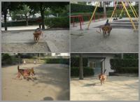 散歩20090925-1