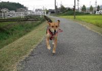 散歩20090927-3