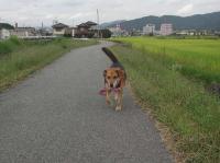 散歩20090928-2