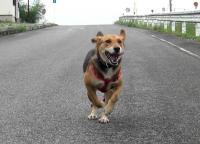 散歩20090929-1