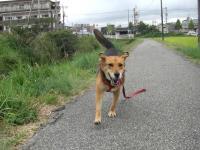 散歩20090929-3