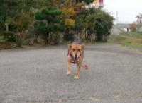 散歩20091024-3