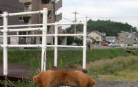散歩20091025-4