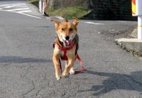 散歩20091030-1