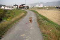 散歩20091030-3