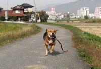 散歩20091030-4