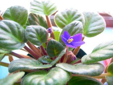 ひっそりと小さな花が咲いていました☆