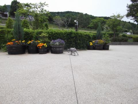 356諏訪湖SA上りconvert_20110619151351