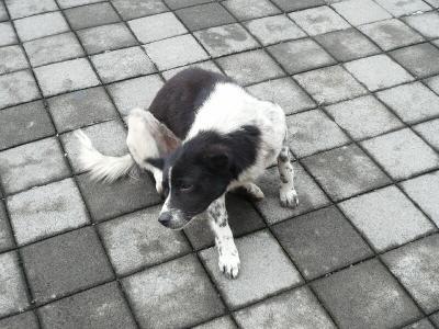 バリ島の野良犬