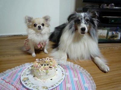 3.ケーキの前で