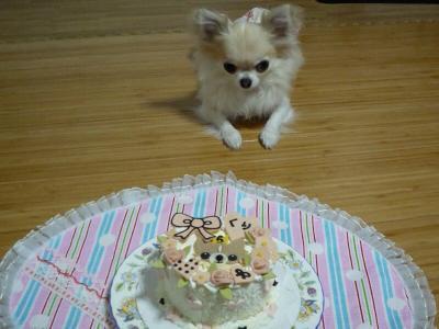 3.ケーキをガン見のくり