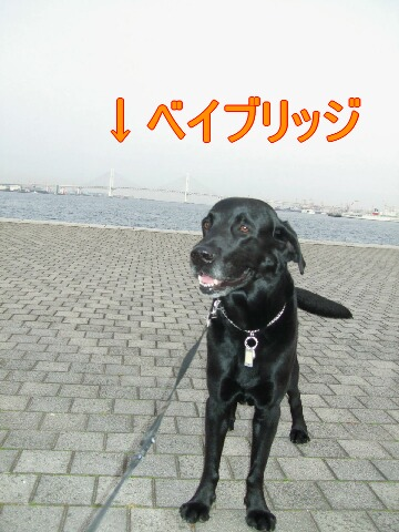 20080308-03.jpg