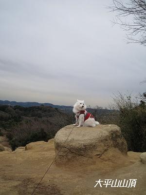 鎌倉一高い山だよ