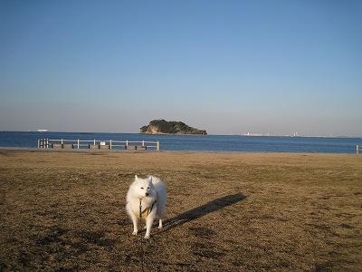 横須賀のシンボルの一つ猿島が近い