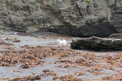 海草がいっぱい。