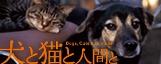 犬と猫と人間とへ