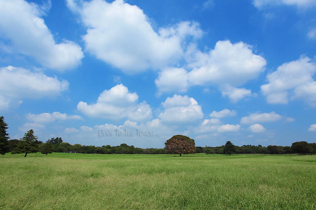 shouwa021.jpg