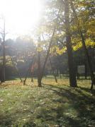 秋晴れの中、イチョウから覘く木漏れ日が、マジで綺麗でした