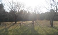 木漏れ日が、綺麗だっぺ。