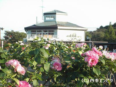 花の丘 バラと建物