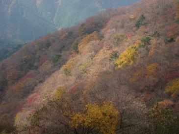 イタツミから金毘羅尾根の紅葉
