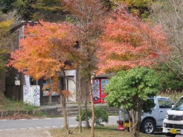 ヤビツ峠の紅葉