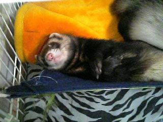 寒い時は寝るに限るデス