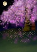 背・夜桜180