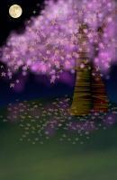 背・夜桜200