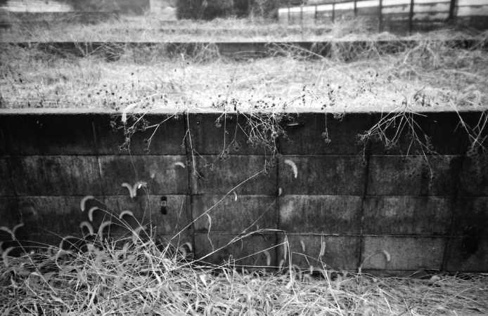 NATURA CLASSICA  /  Kodak T-MAX 400