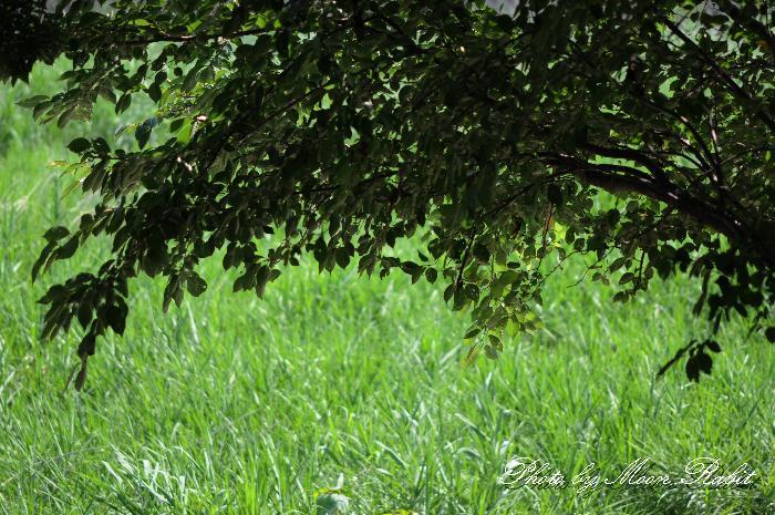 飯積橋近くの渦井川原にて 愛媛県西条市下島山川北 2011年8月12日
