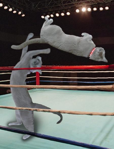 ボクシング5