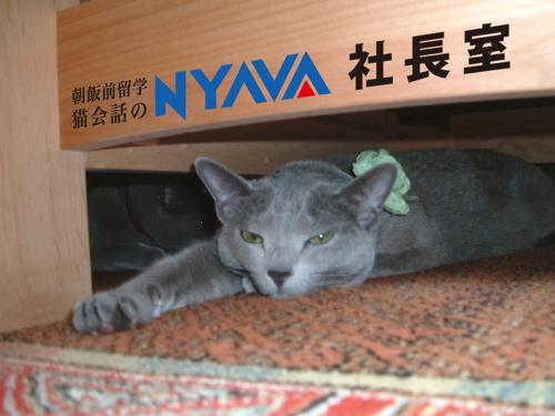 NYAVA社長室