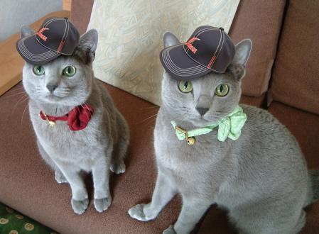 日本代表猫