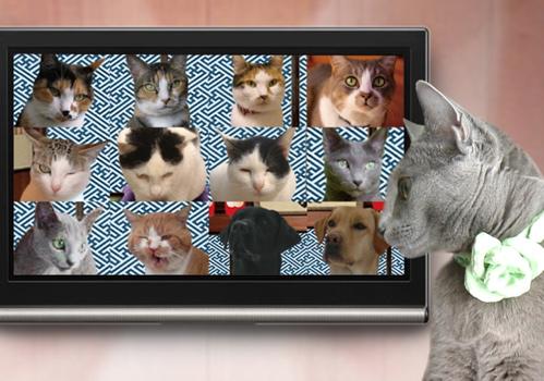 最優秀猫3