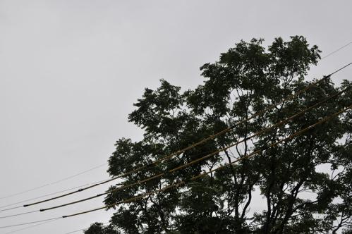 台風2011