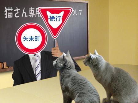 猫標識11