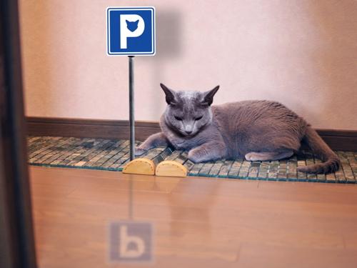猫標識18