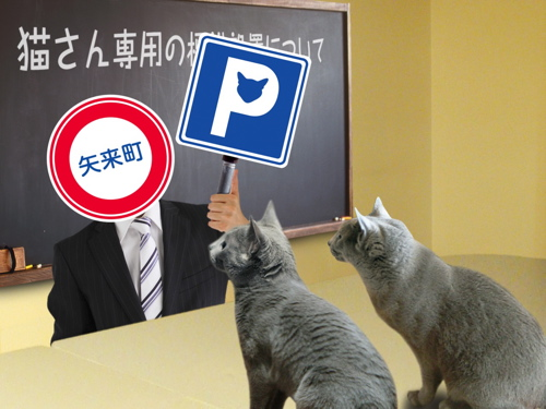 猫標識17