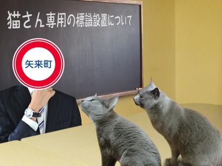 猫標識15